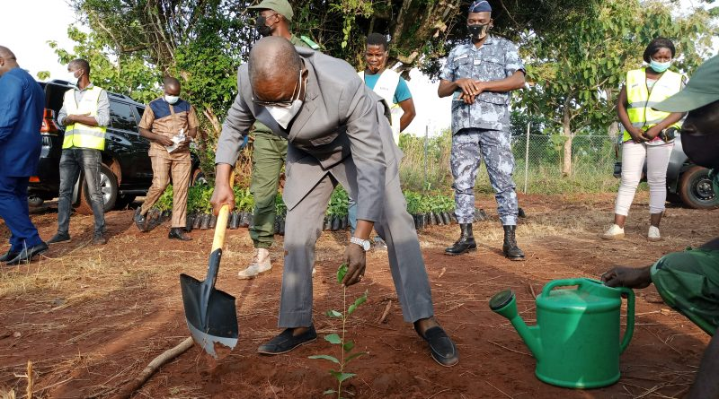 Journée nationale de l'arbre : Le ministre d'Etat Payadowa Boukpessi a donné le ton de la campagne de reboisement