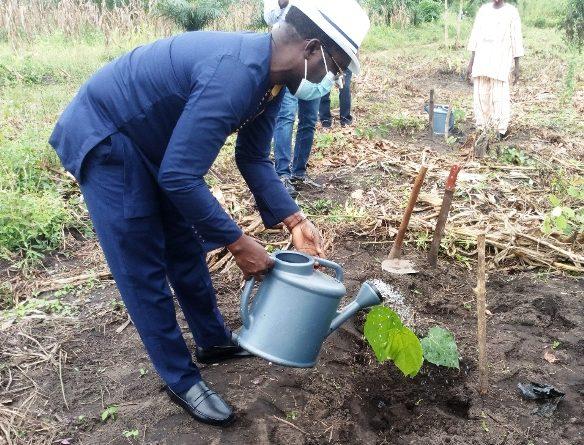 Célébration de la Journée Internationale de la protection de la couche d'ozone: L'événement marqué au Togo par une opération de reboisement